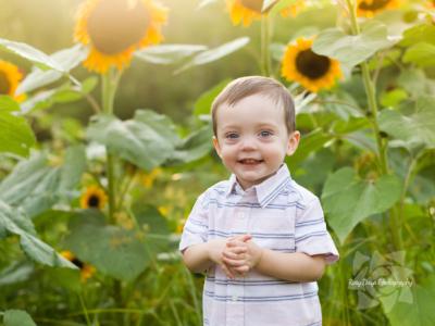 Late Summer Sunshine & Sunflowers